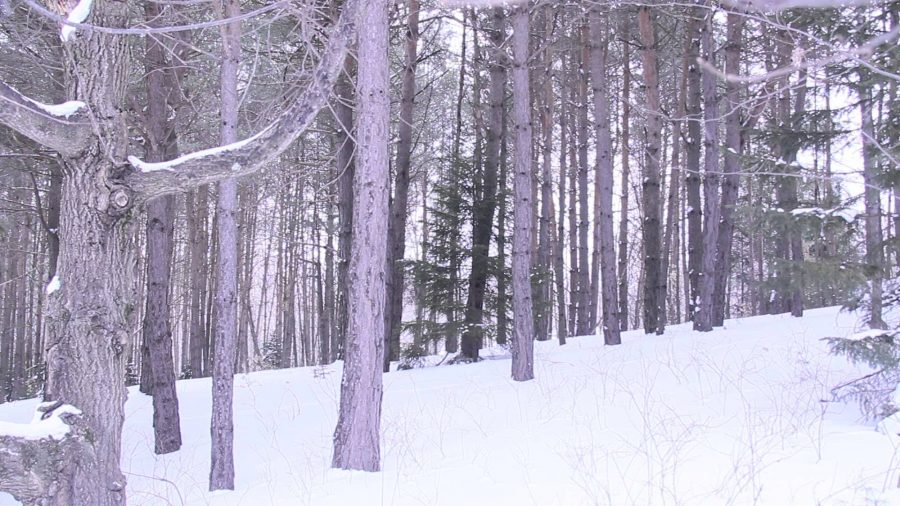 Winter+Snow%3F+Looks+like+a+no.