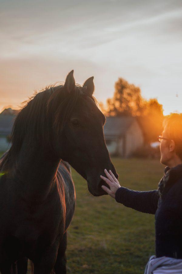 Look into Wheatland Farm Equine Therapy